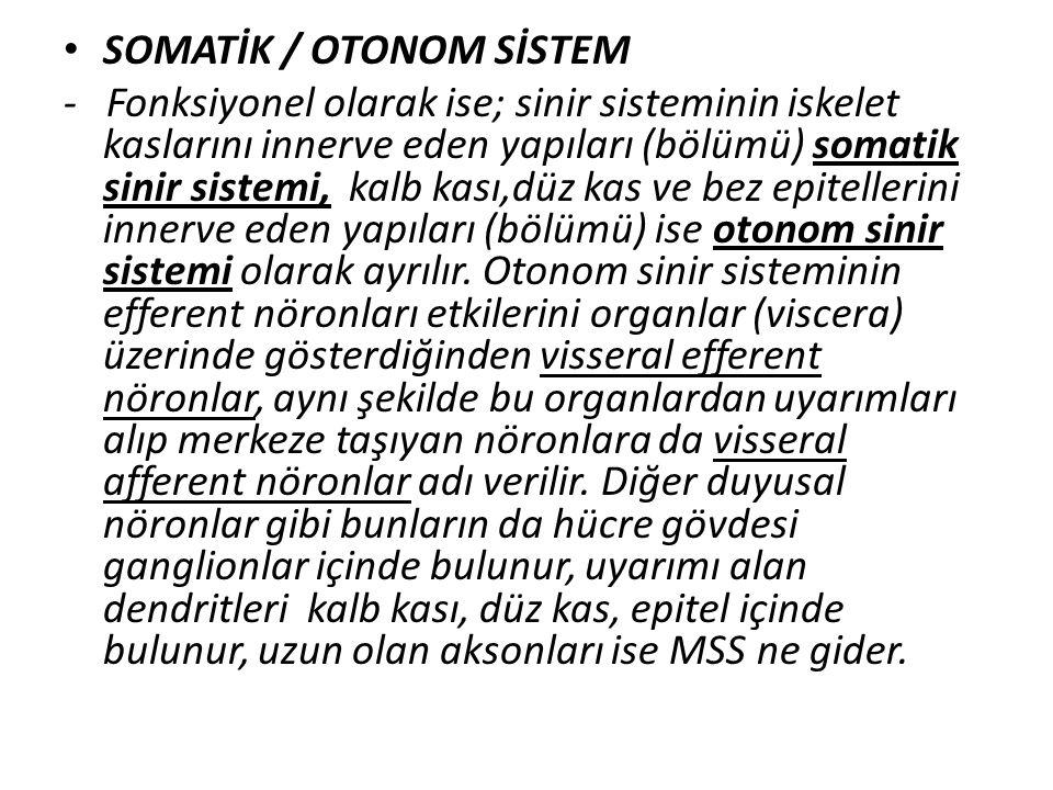 SOMATİK / OTONOM SİSTEM