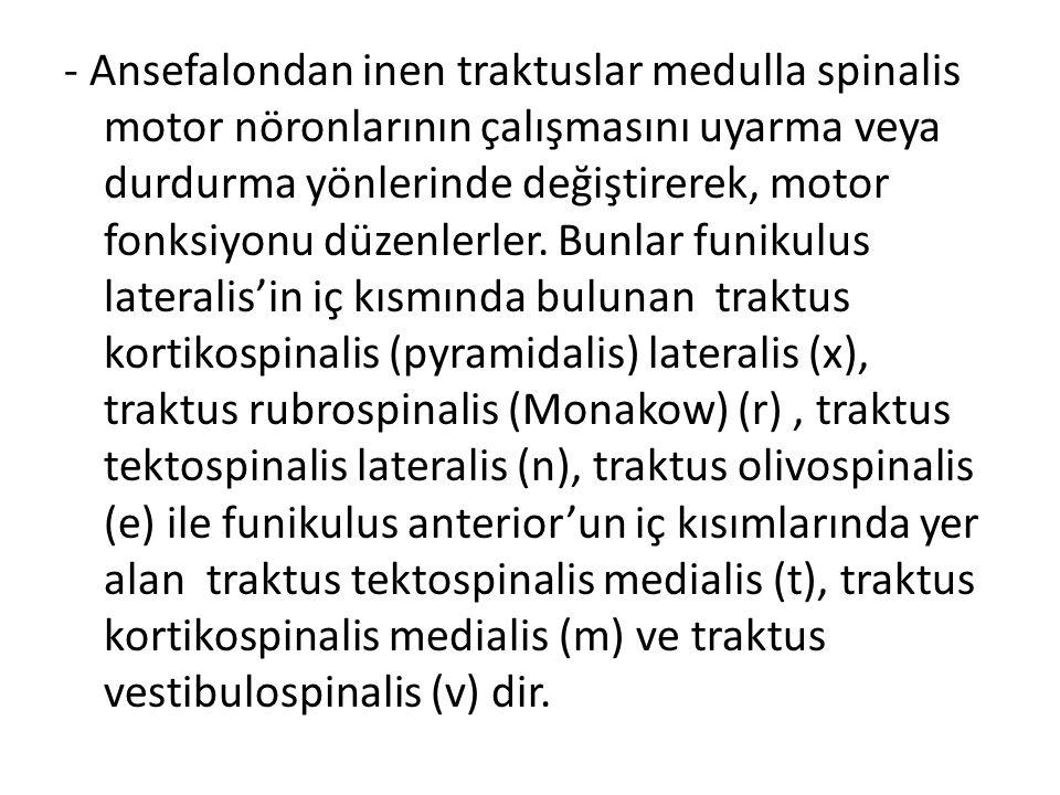 - Ansefalondan inen traktuslar medulla spinalis motor nöronlarının çalışmasını uyarma veya durdurma yönlerinde değiştirerek, motor fonksiyonu düzenlerler.