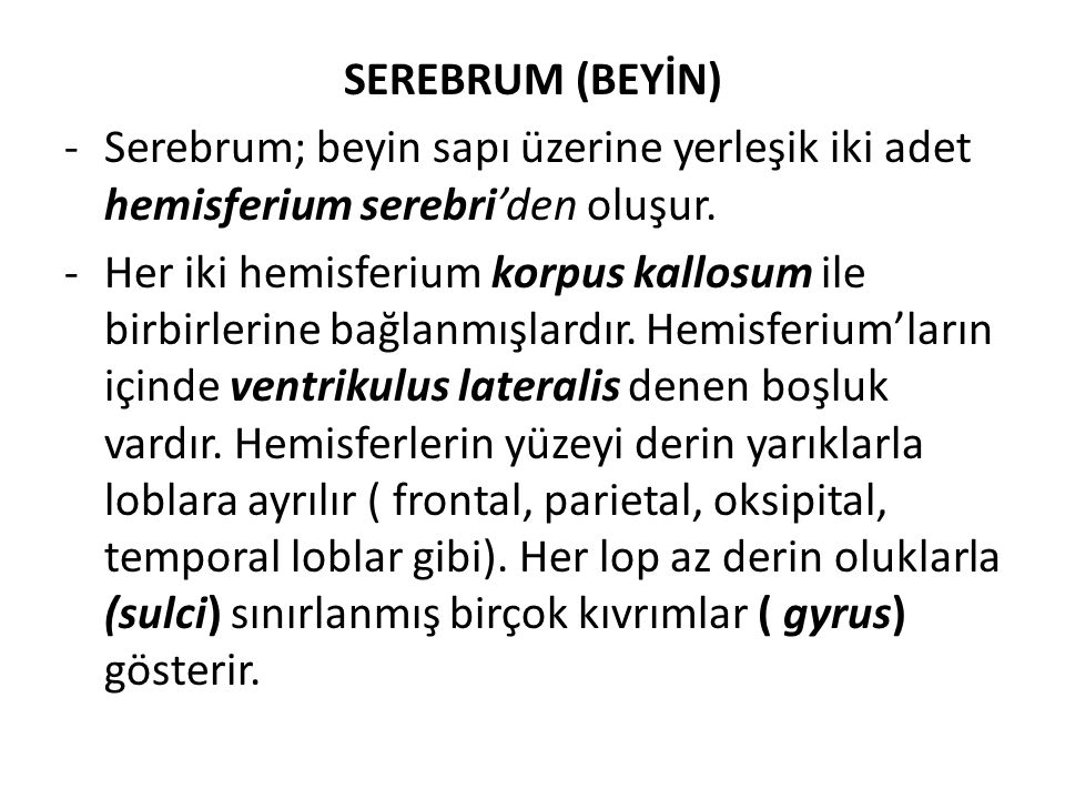 SEREBRUM (BEYİN) Serebrum; beyin sapı üzerine yerleşik iki adet hemisferium serebri'den oluşur.