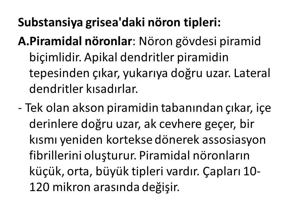Substansiya grisea daki nöron tipleri: