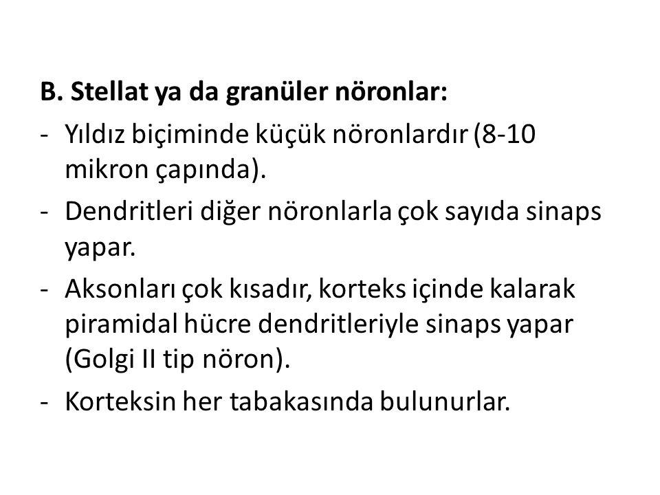 B. Stellat ya da granüler nöronlar: