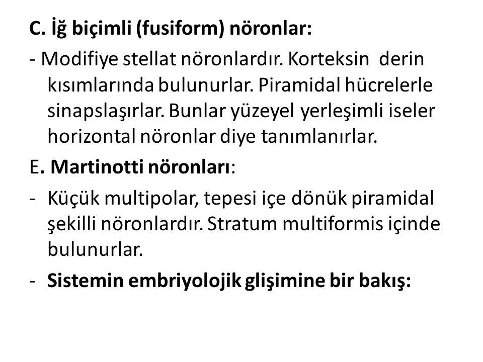 C. İğ biçimli (fusiform) nöronlar: