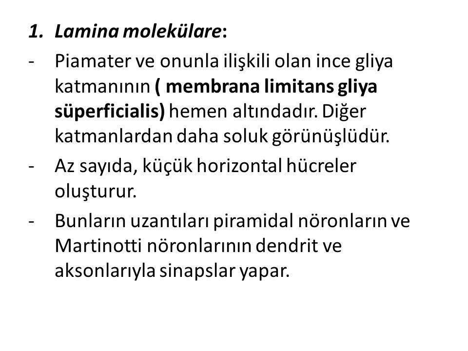 Lamina molekülare: