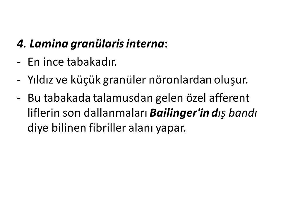 4. Lamina granülaris interna: