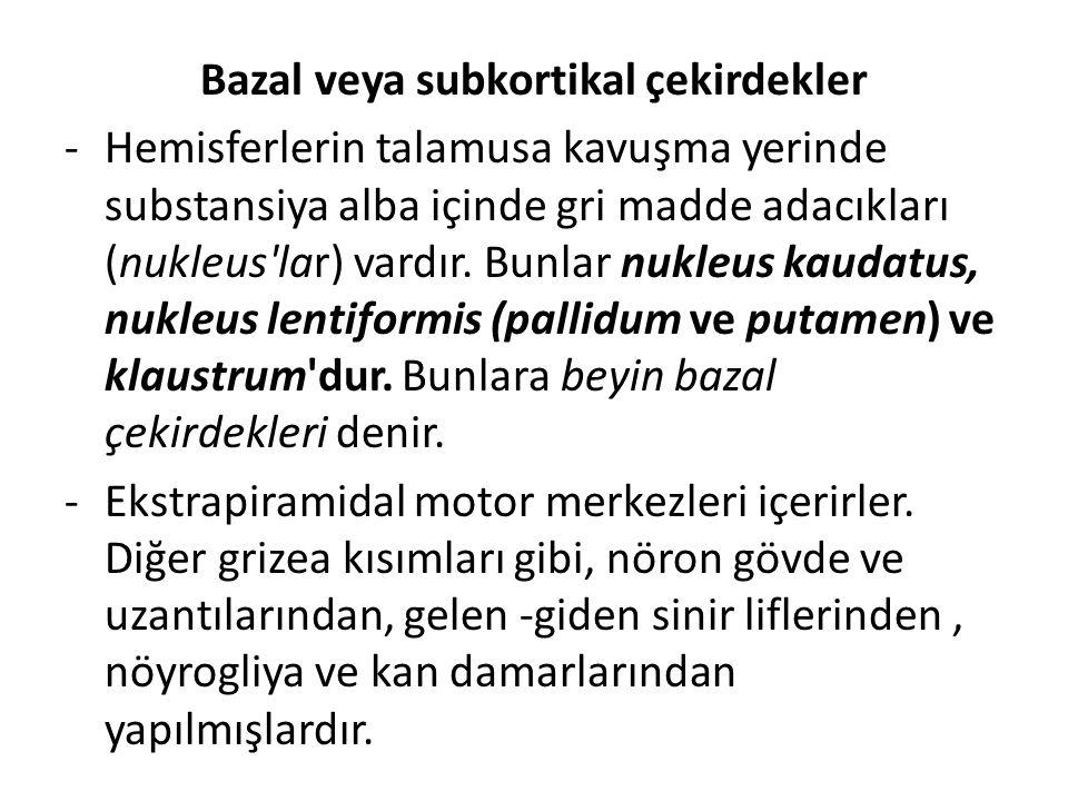 Bazal veya subkortikal çekirdekler