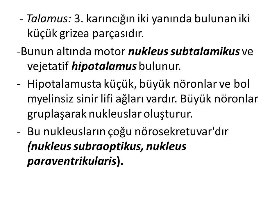 - Talamus: 3. karıncığın iki yanında bulunan iki küçük grizea parçasıdır.