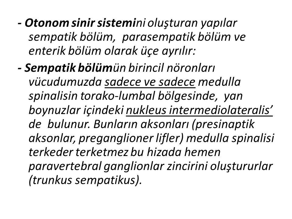 - Otonom sinir sistemini oluşturan yapılar sempatik bölüm, parasempatik bölüm ve enterik bölüm olarak üçe ayrılır: - Sempatik bölümün birincil nöronları vücudumuzda sadece ve sadece medulla spinalisin torako-lumbal bölgesinde, yan boynuzlar içindeki nukleus intermediolateralis' de bulunur.