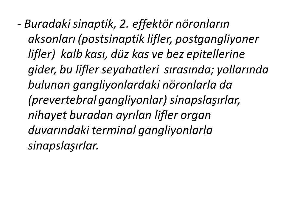 - Buradaki sinaptik, 2.