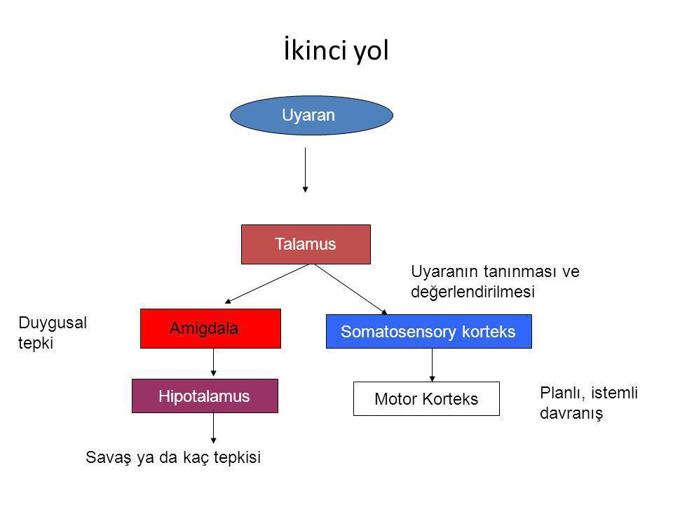Somatosensory korteks