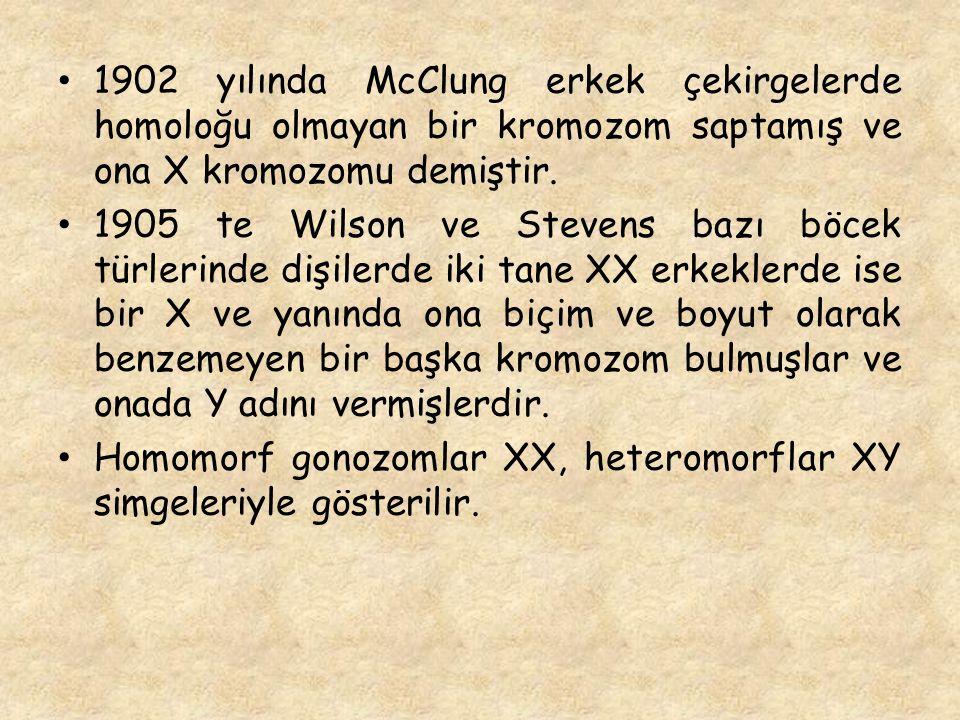 1902 yılında McClung erkek çekirgelerde homoloğu olmayan bir kromozom saptamış ve ona X kromozomu demiştir.