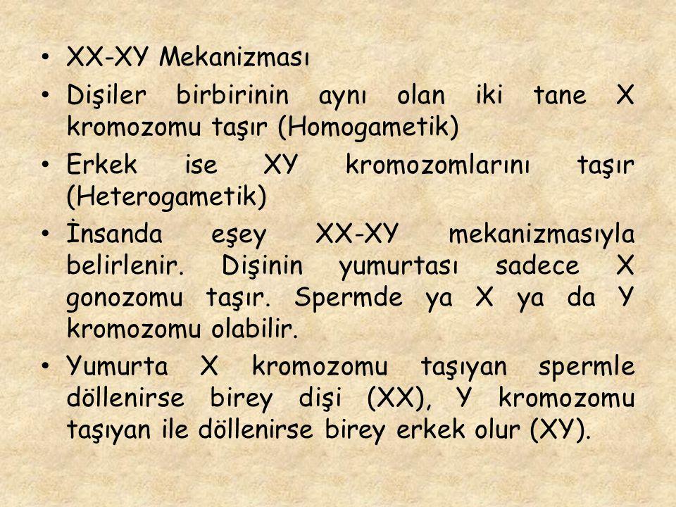XX-XY Mekanizması Dişiler birbirinin aynı olan iki tane X kromozomu taşır (Homogametik) Erkek ise XY kromozomlarını taşır (Heterogametik)