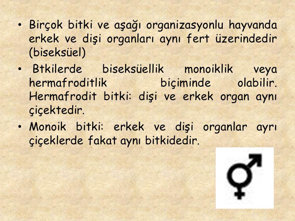 Birçok bitki ve aşağı organizasyonlu hayvanda erkek ve dişi organları aynı fert üzerindedir (biseksüel)