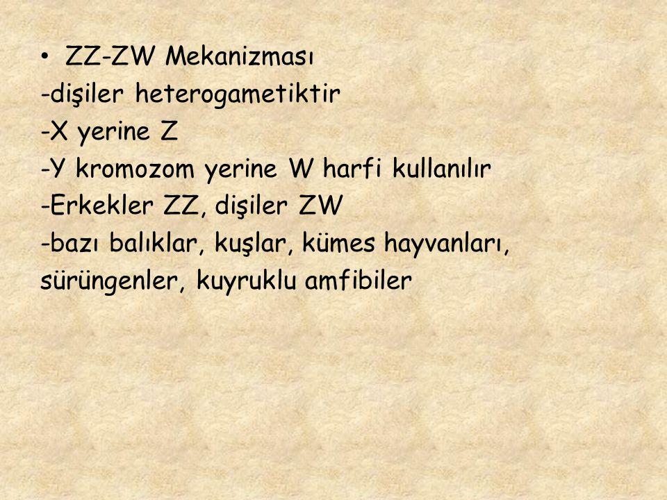 ZZ-ZW Mekanizması -dişiler heterogametiktir. -X yerine Z. -Y kromozom yerine W harfi kullanılır. -Erkekler ZZ, dişiler ZW.