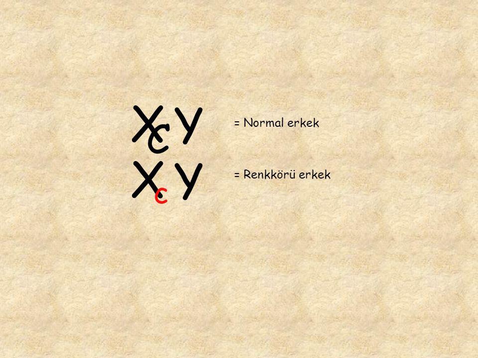 X C Y = Normal erkek X c Y = Renkkörü erkek