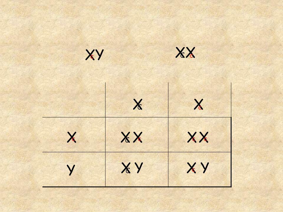 XX XY c C c X C X c X c X C X c X c X c X C Y X c Y Y