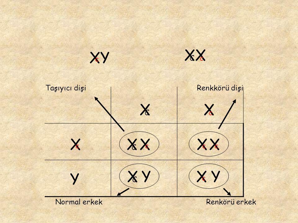 XX XY X X X X X X X X Y X Y Y c C c Taşıyıcı dişi Renkkörü dişi C c c