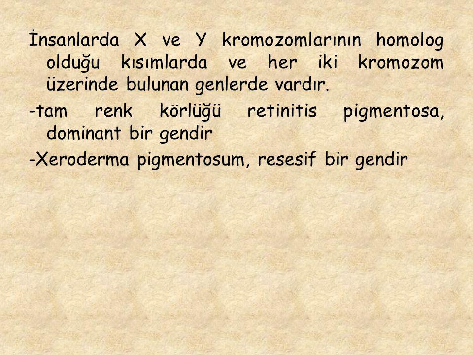 İnsanlarda X ve Y kromozomlarının homolog olduğu kısımlarda ve her iki kromozom üzerinde bulunan genlerde vardır.