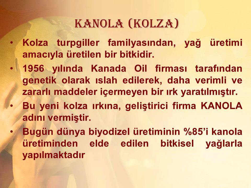 KANOLA (KOLZA) Kolza turpgiller familyasından, yağ üretimi amacıyla üretilen bir bitkidir.