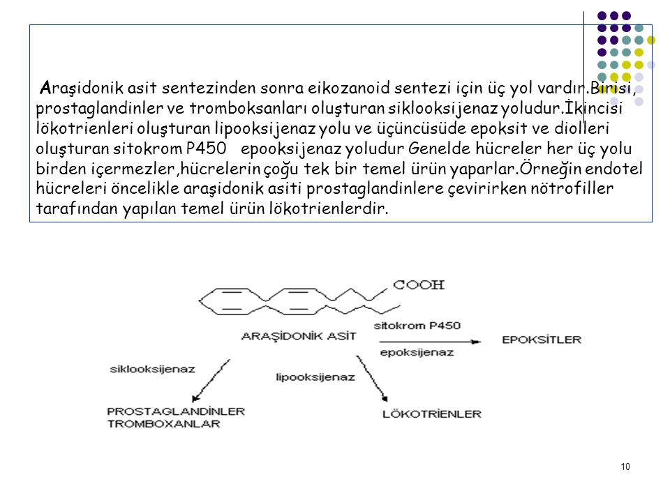 Araşidonik asit sentezinden sonra eikozanoid sentezi için üç yol vardır.Birisi, prostaglandinler ve tromboksanları oluşturan siklooksijenaz yoludur.İkincisi lökotrienleri oluşturan lipooksijenaz yolu ve üçüncüsüde epoksit ve diolleri oluşturan sitokrom P450 epooksijenaz yoludur Genelde hücreler her üç yolu birden içermezler,hücrelerin çoğu tek bir temel ürün yaparlar.Örneğin endotel hücreleri öncelikle araşidonik asiti prostaglandinlere çevirirken nötrofiller tarafından yapılan temel ürün lökotrienlerdir.