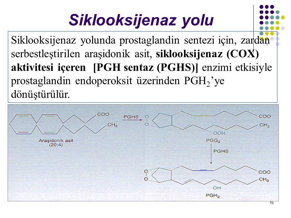 Siklooksijenaz yolu