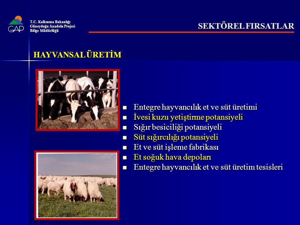 Entegre hayvancılık et ve süt üretimi