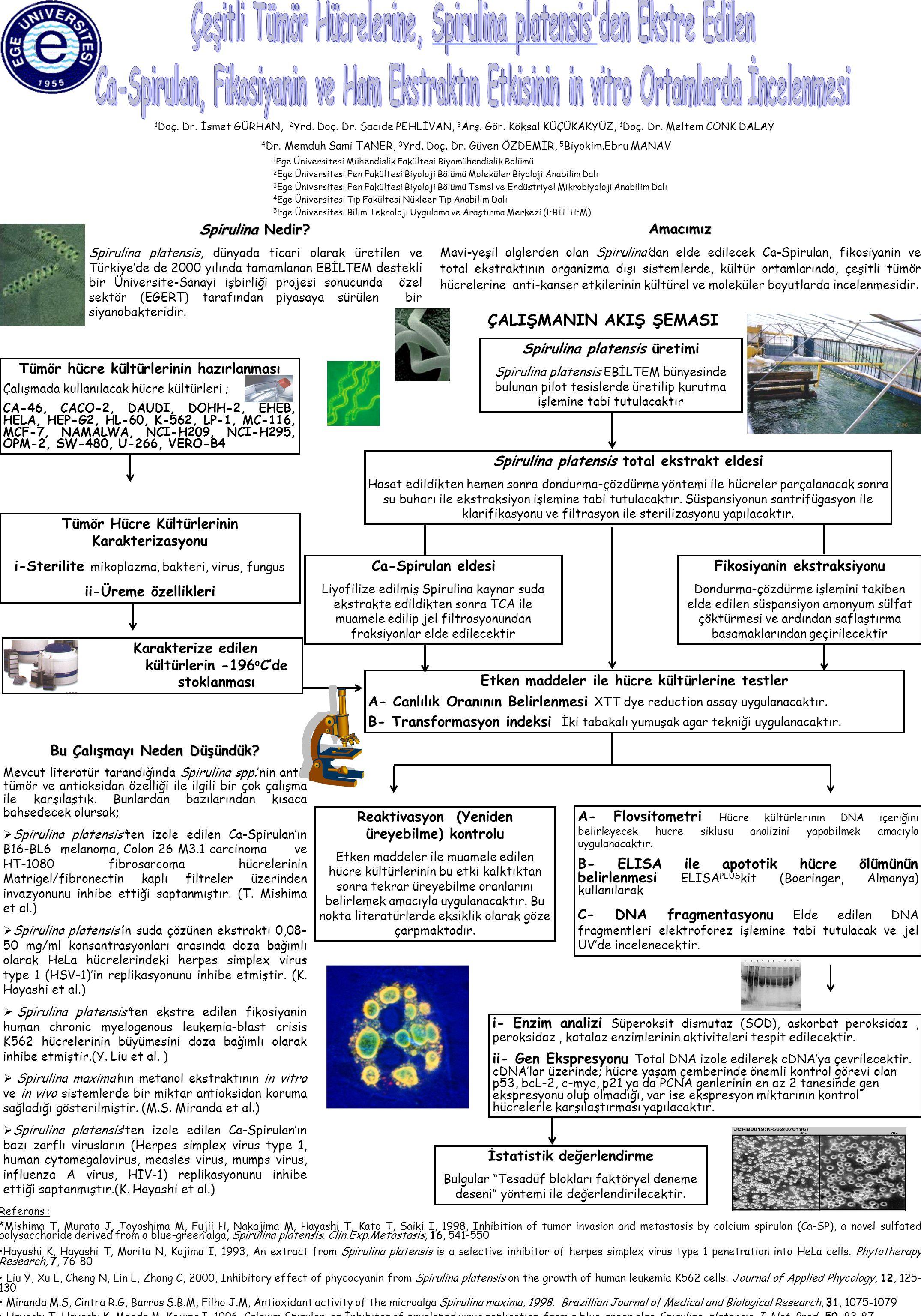 Çeşitli Tümör Hücrelerine, Spirulina platensis den Ekstre Edilen