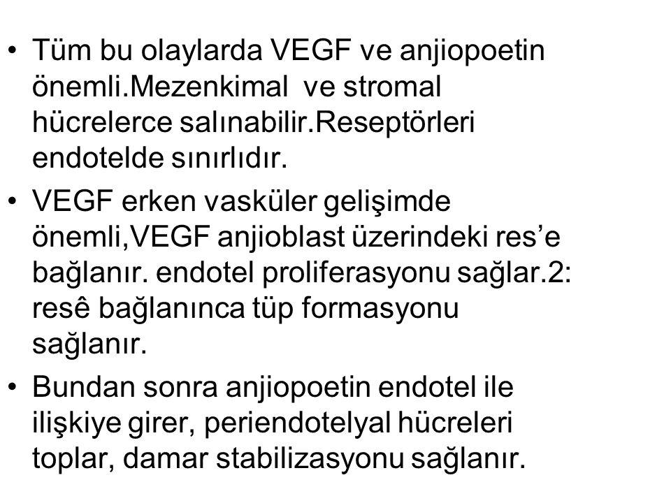 Tüm bu olaylarda VEGF ve anjiopoetin önemli