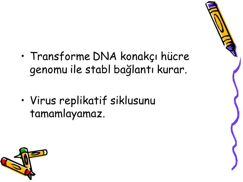 Transforme DNA konakçı hücre genomu ile stabl bağlantı kurar.
