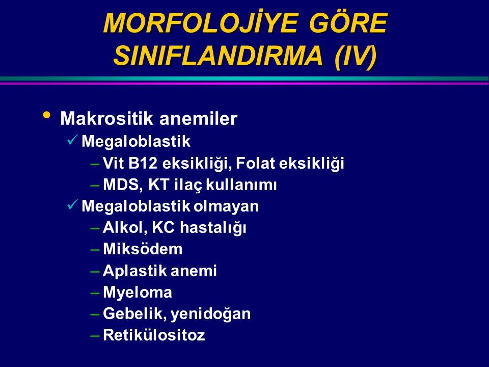 MORFOLOJİYE GÖRE SINIFLANDIRMA (IV)