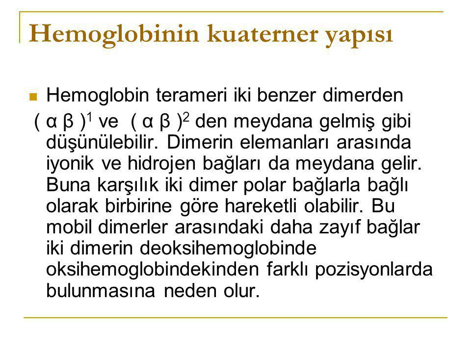 Hemoglobinin kuaterner yapısı