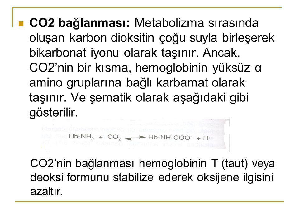 CO2 bağlanması: Metabolizma sırasında oluşan karbon dioksitin çoğu suyla birleşerek bikarbonat iyonu olarak taşınır. Ancak, CO2'nin bir kısma, hemoglobinin yüksüz α amino gruplarına bağlı karbamat olarak taşınır. Ve şematik olarak aşağıdaki gibi gösterilir.