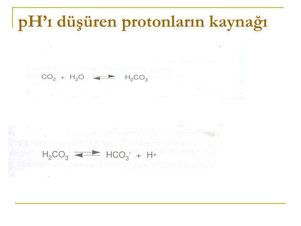 pH'ı düşüren protonların kaynağı