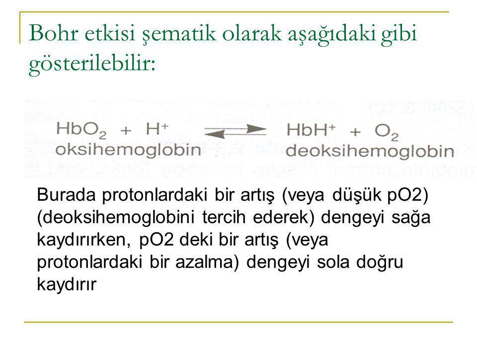 Bohr etkisi şematik olarak aşağıdaki gibi gösterilebilir: