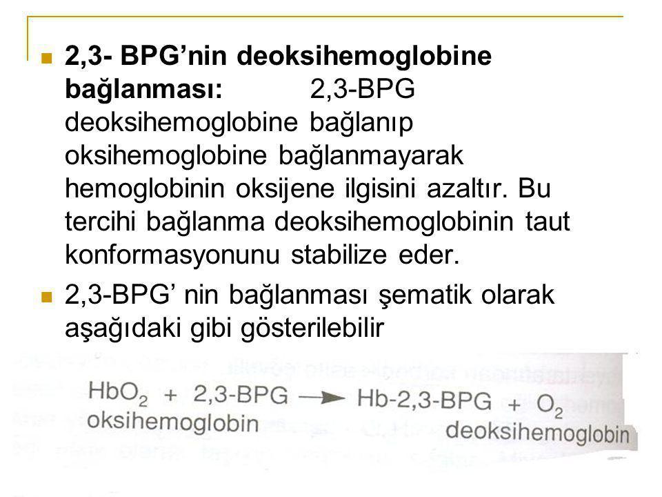 2,3- BPG'nin deoksihemoglobine bağlanması: 2,3-BPG deoksihemoglobine bağlanıp oksihemoglobine bağlanmayarak hemoglobinin oksijene ilgisini azaltır. Bu tercihi bağlanma deoksihemoglobinin taut konformasyonunu stabilize eder.