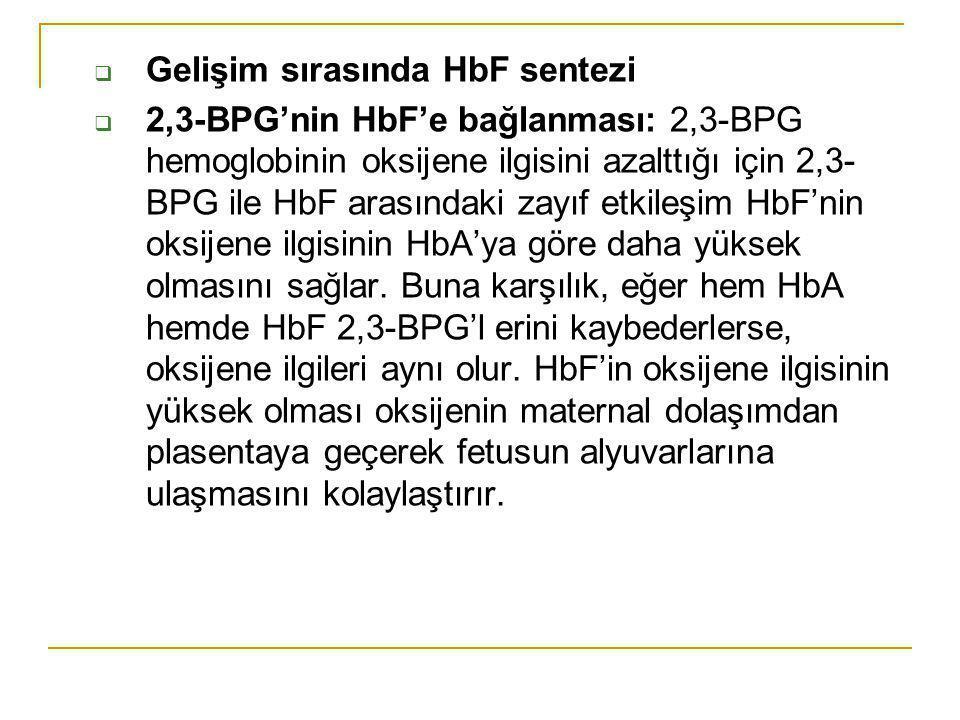 Gelişim sırasında HbF sentezi