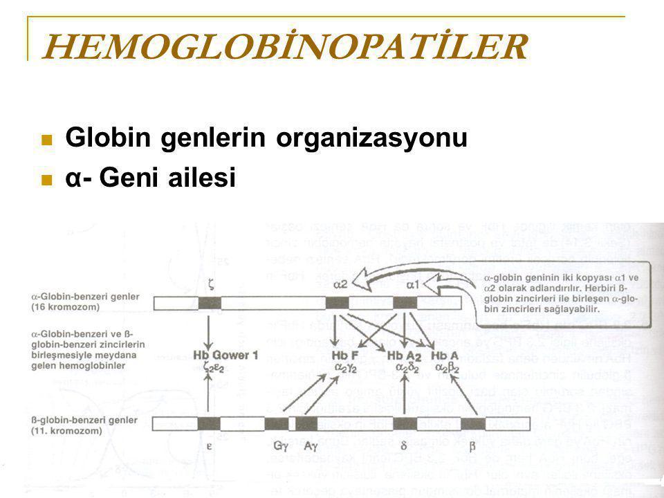 HEMOGLOBİNOPATİLER Globin genlerin organizasyonu α- Geni ailesi
