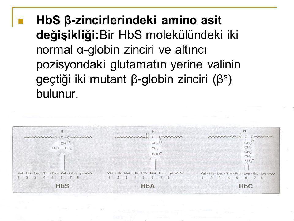 HbS β-zincirlerindeki amino asit değişikliği:Bir HbS molekülündeki iki normal α-globin zinciri ve altıncı pozisyondaki glutamatın yerine valinin geçtiği iki mutant β-globin zinciri (βs) bulunur.