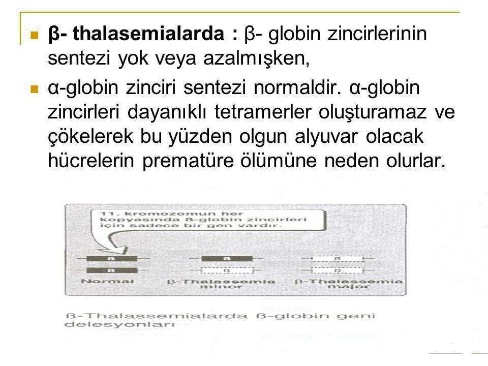 β- thalasemialarda : β- globin zincirlerinin sentezi yok veya azalmışken,