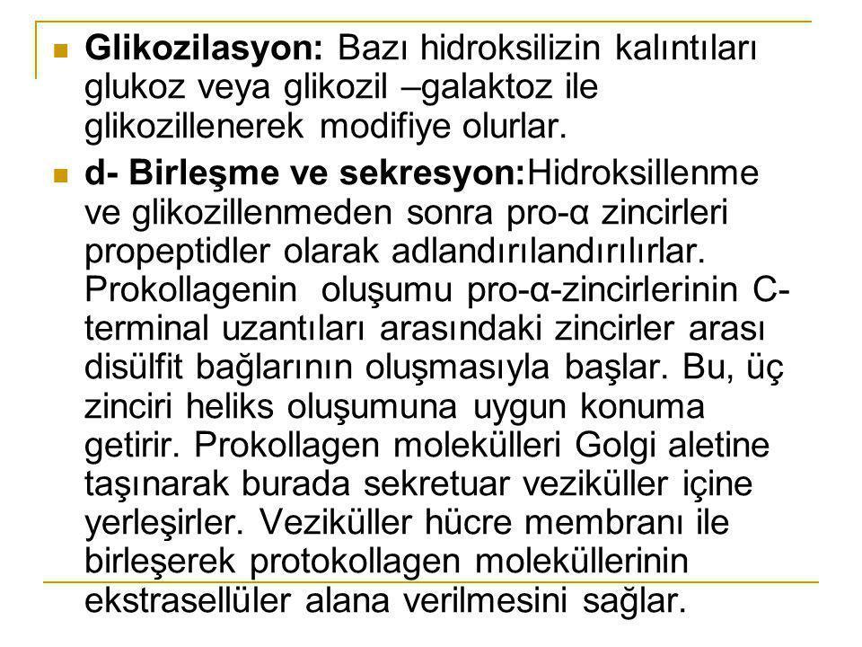 Glikozilasyon: Bazı hidroksilizin kalıntıları glukoz veya glikozil –galaktoz ile glikozillenerek modifiye olurlar.