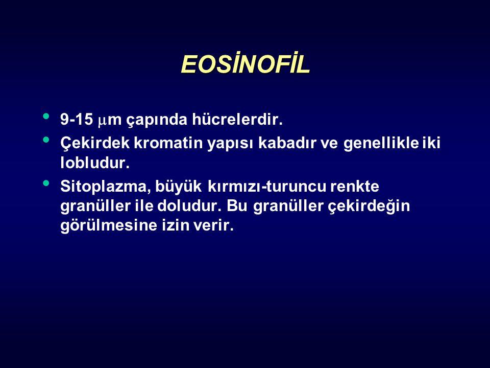 EOSİNOFİL 9-15 m çapında hücrelerdir.