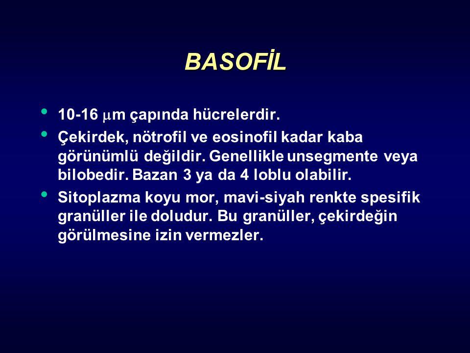 BASOFİL 10-16 m çapında hücrelerdir.