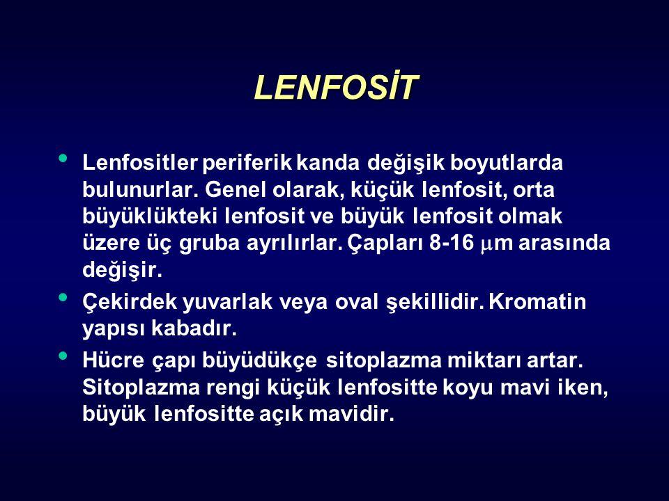 LENFOSİT