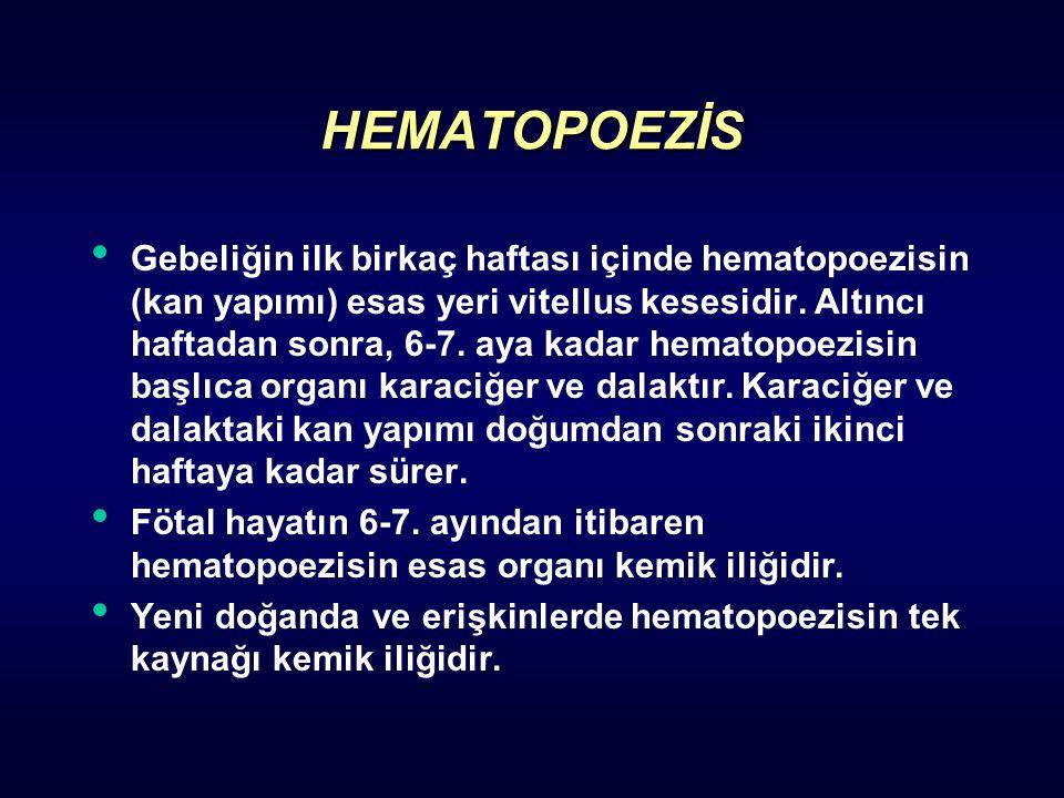 HEMATOPOEZİS