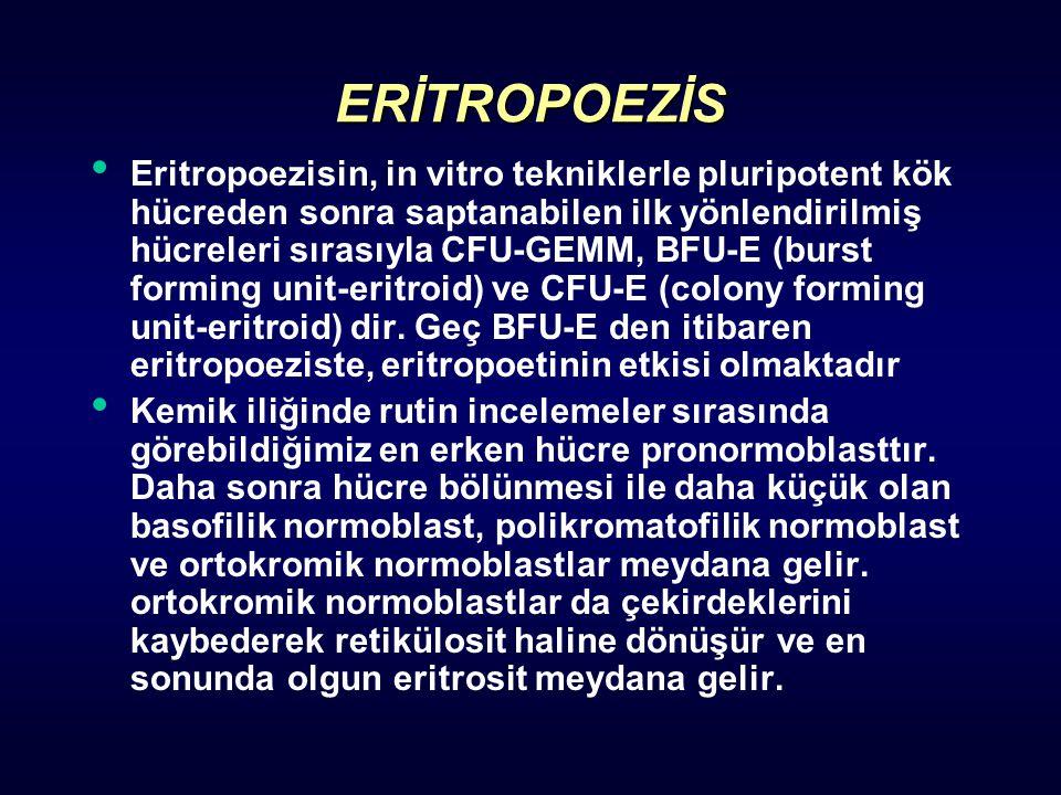 ERİTROPOEZİS