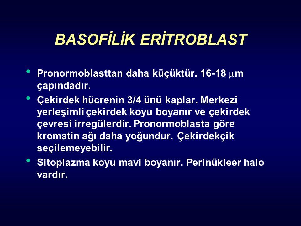 BASOFİLİK ERİTROBLAST