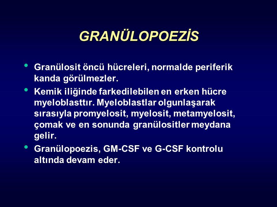 GRANÜLOPOEZİS Granülosit öncü hücreleri, normalde periferik kanda görülmezler.
