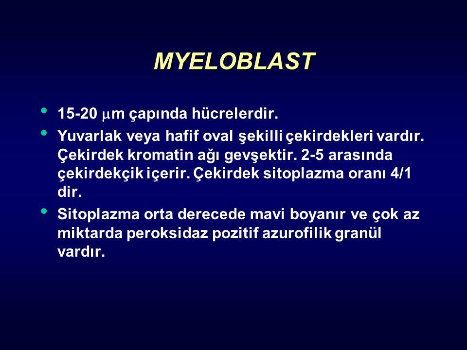 MYELOBLAST 15-20 m çapında hücrelerdir.