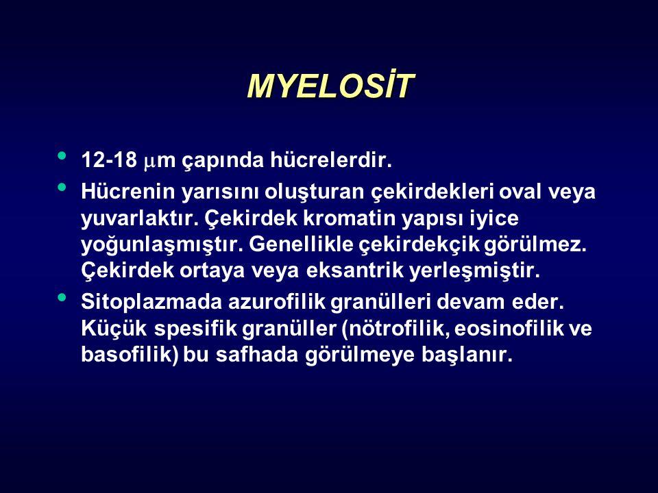 MYELOSİT 12-18 m çapında hücrelerdir.