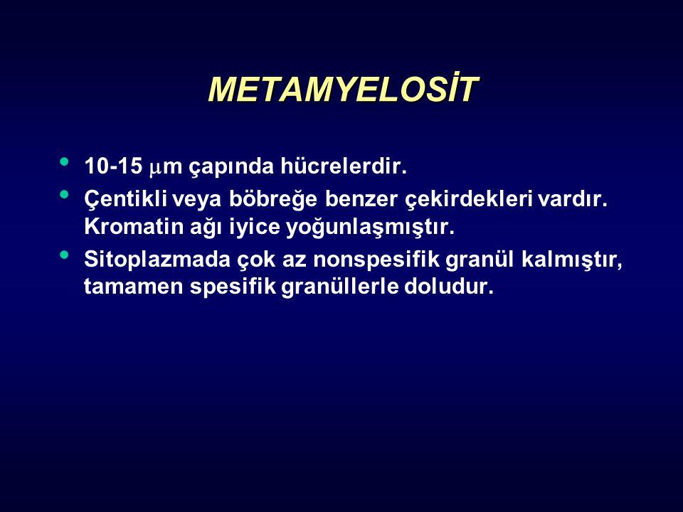 METAMYELOSİT 10-15 m çapında hücrelerdir.