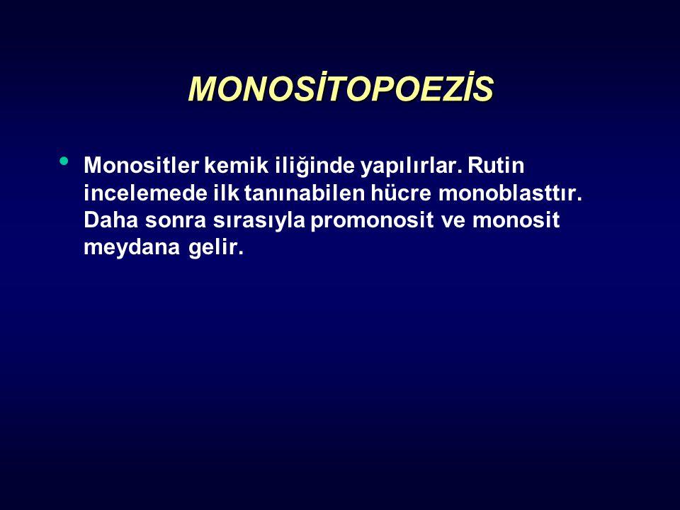 MONOSİTOPOEZİS